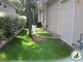 backyard lawn grass, trees and plants